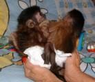 Capuchin Monkeys Need New Homes